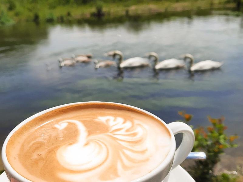 Pader Café Cappuccino mit Schwänen